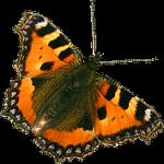 Papillon Biodanza-Lille et Nord-Pas de Calais 59-62 avec Gerard Lallez