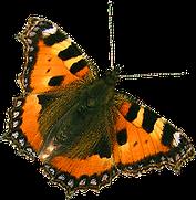Papillon liens Biodanza-Lille et Nord-Pas de Calais 59-62 avec Gerard Lallez
