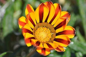 Fleur jaune orange Biodanza Lille et Nord-pas de Calais avec Gérard